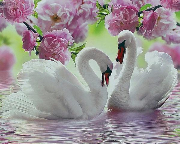 Картина рисование по номерам Чарівний діамант Прекрасные лебеди РКДИ-0228 40х50см набор для росписи, краски,