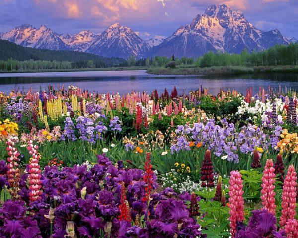 Картина рисование по номерам Чарівний діамант Весна в Альпах РКДИ-0025 40х50см набор для росписи, краски,
