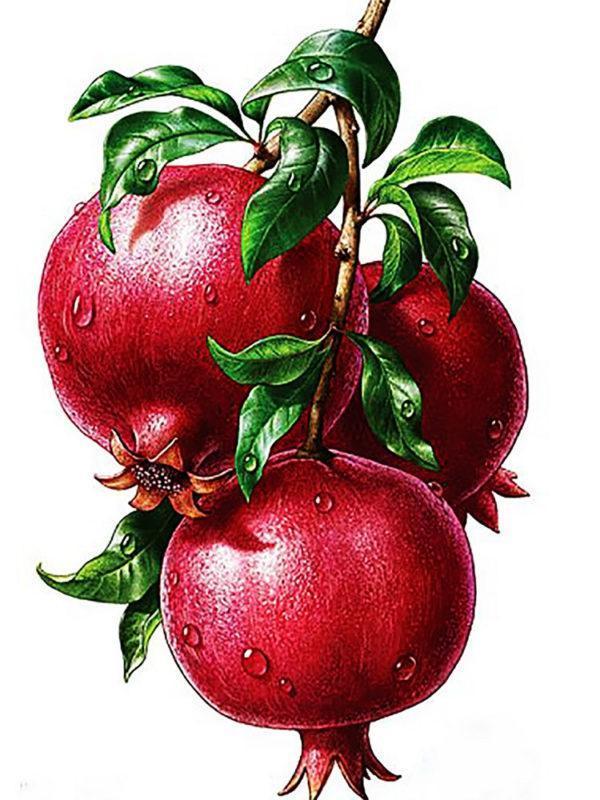 Картина рисование по номерам Чарівний діамант Гранаты РКДИ-0221 30х40см набор для росписи, краски, кисти,