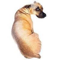 Декоративная 3d подушка собака, фото 1