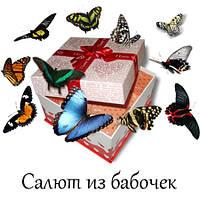Салют из живых бабочек
