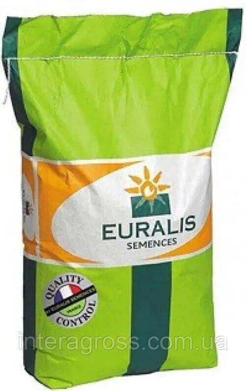 Купить насіння кукурудзи ЕС Олкани