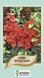 Семена Айва японская 20 семян W.Legutko 6055