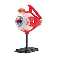 Модель очного яблука збірна 14 см Eyeball anatomy model