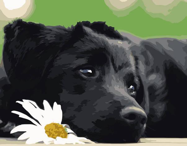 Картина по номерам VA-0518 Черный щенок, 40х50см. Strateg, фото 2