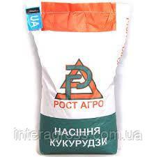 Купить насіння кукурудзи ДН Рава