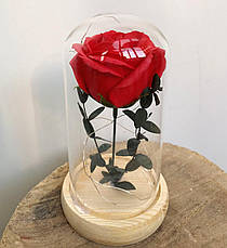 Вечная роза в колбе с LED подсветкой 17,5 см. Красная. Вечно живая роза с подсветкой, фото 3