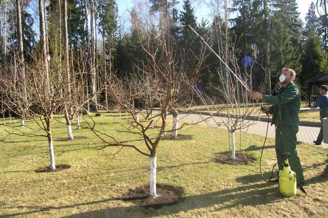 Как проводить обработку сада и деревьев осенью своими руками
