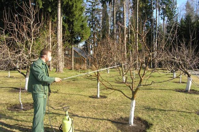 обработка растений, в саду, сроки,особенности обработки, растений