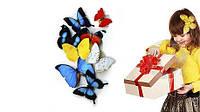 Салют из 3 живых бабочек