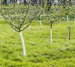 Средства защиты для деревьев. Защита сада