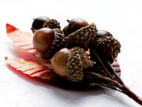 Бутоньерка Желуди на проволоке с листиками, декоративные ягоды, фото 1