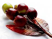 Бутоньерка Ягоды на проволоке с листиками, декоративные ягоды