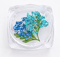 Сухоцветы для дизайна ногтей 14