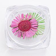 Сухоцветы для дизайна ногтей, фото 1
