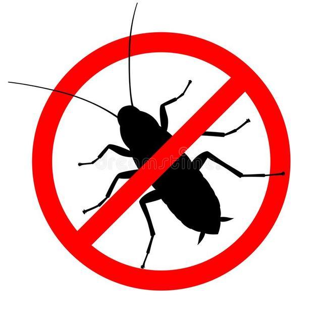 Ползающие насекомые
