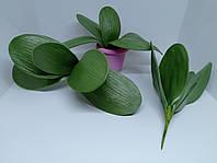 Лист орхидеи