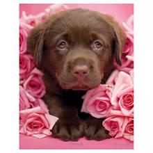 Мини-постер Песик в розах