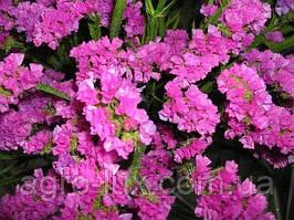 Статица выемчастая Карминово-розовая 10гр Hем Zaden