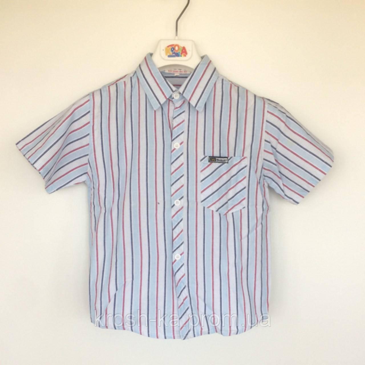 Рубашка для мальчика к\рукав цветная  полоска (110-140)р Vilen Китай 12-20