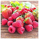 SINNLIG СІНЛІГ, Свічка ароматична у склянці, Червоні садові ягоди, червоний7.5 см, фото 3