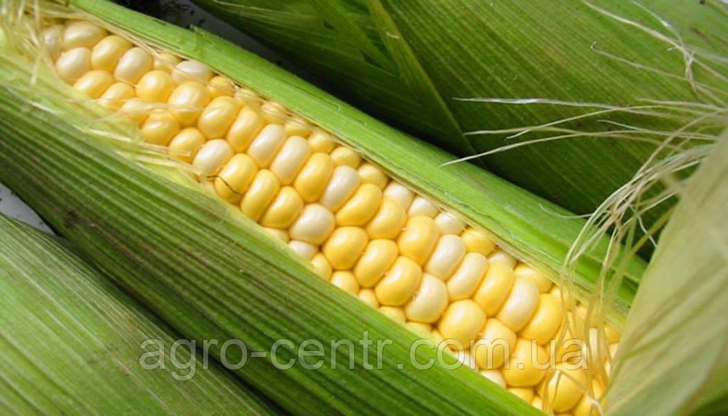 Кукуруза ДКС 4590 (DKC 4590) - купить Украине на 2020.