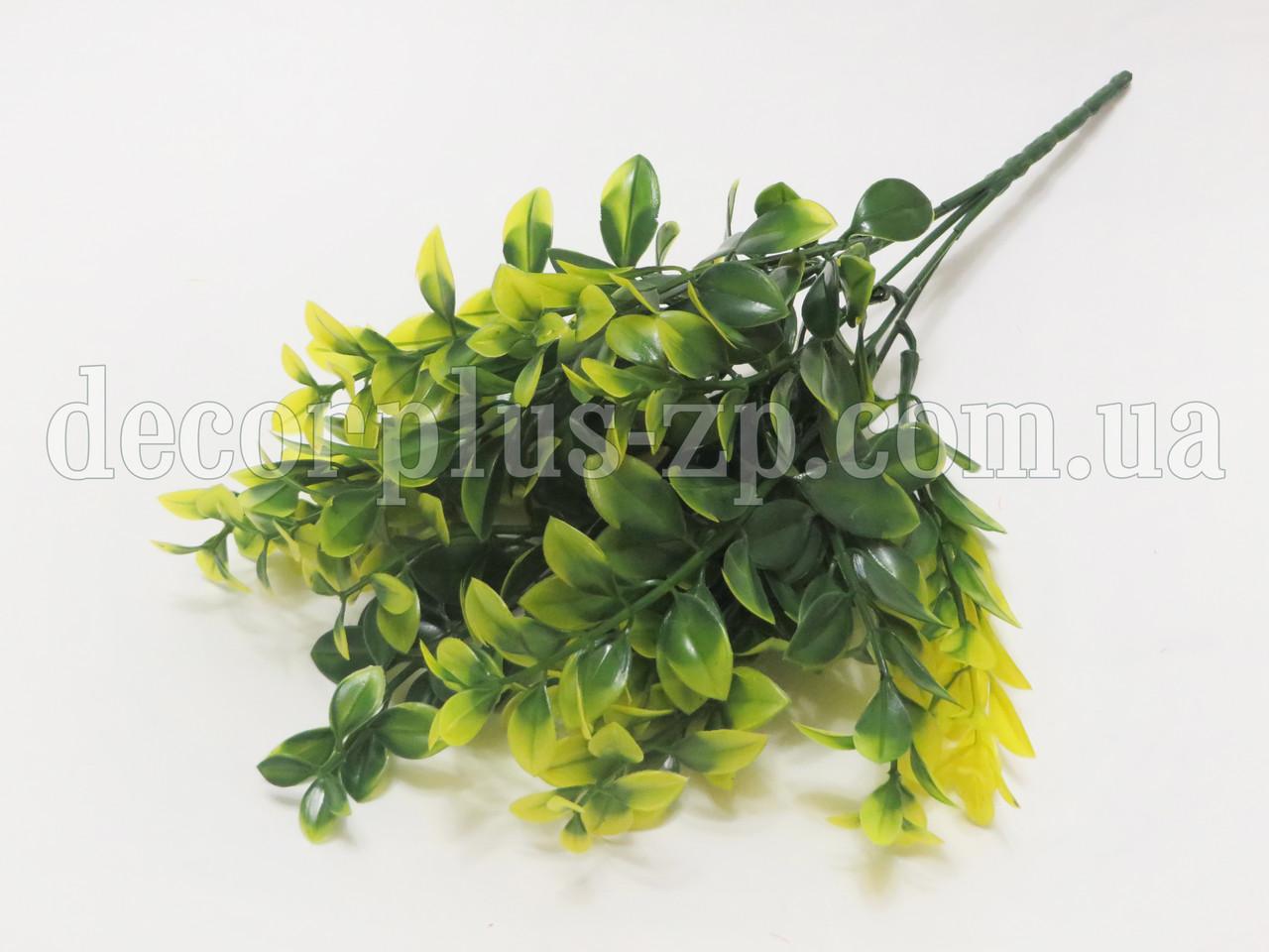 Букет лавра декоративного. Зелено-желтый