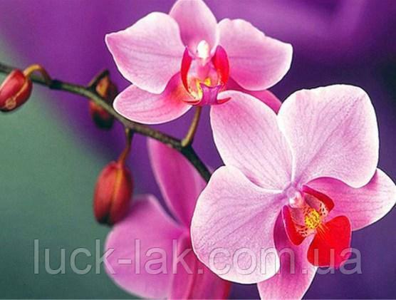 Алмазная вышивка орхидея 20х30 см, полная выкладка, квадратные стразы