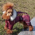Комбинезон для собак Флеш, мальчик, силикон, XXS/ 22 см, фото 5