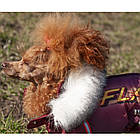 Комбинезон для собак Флеш, мальчик, силикон, XXS/ 22 см, фото 2