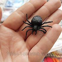 Реалистичный средний паук резина