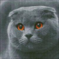 АМП-136. Кіт шотландської породи. Алмазна мозаїка.