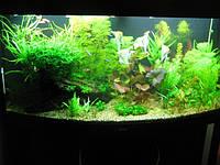 Обслуживание аквариумов в Одессе