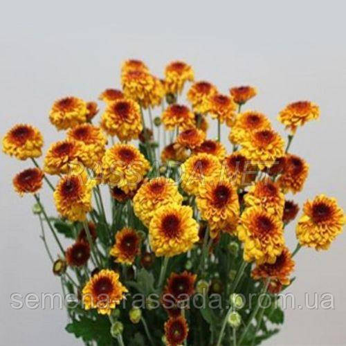 Хризантема Сафир оранжевый Черенок 2-5 см
