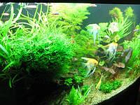Сервисное обслуживание аквариумов в Одессе