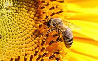 Мед акациевый, экологически чистый от производителя  оптом  из степей Херсонщины