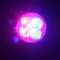 Светодиодная фито лампа Oasisled e27 5Вт для растений