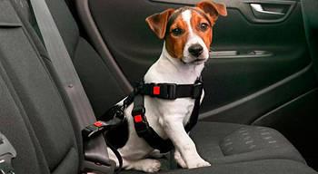 Животные в автомобиле