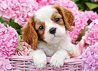 """Пазлы """"Щенок в розовых цветах"""", 180 эл В-018185 Castorland для детей"""
