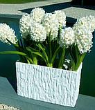 Гіацинт Crystal Snow махровий 1 цибулина, фото 5