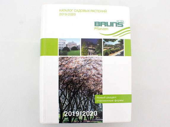 Каталог Брунс 2019-2020, фото 2