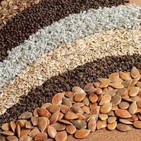 У Європі визнають якість українського насіння
