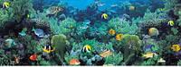 """3Д светящиеся обои """"Кораловый риф"""" 135/360см."""