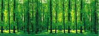 """3Д светящиеся обои """"Лесной парк-1"""" 135/360см."""