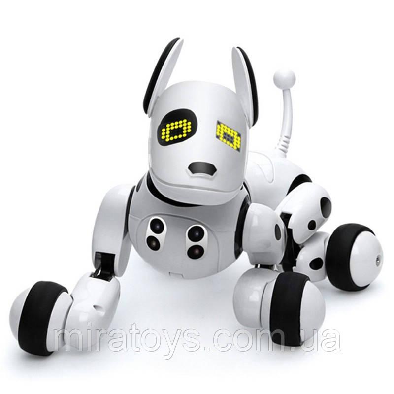 Робот-собака 9007A на радіоуправлінні. Танцює, виконує команди.