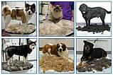 Щітка для грумінгу великих собак deShedding tool Large Фурминатор Fubnimroat лезо 10,16 см, фото 5