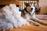 Щітка для грумінгу великих собак deShedding tool Large Фурминатор Fubnimroat лезо 10,16 см, фото 10