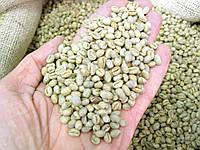 Кофе зеленый в зернах Бразилия Пиберри (ОРИГИНАЛ), арабика Gardman (Гардман) , фото 1