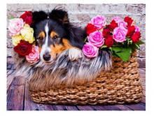 """Картина по номерам """"Колли в цветах"""" 40*50 см (3654)"""