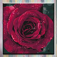 "Картина по номерам Цветы ""Роза"" 40х40см"